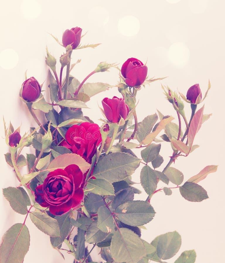Piccole rose d'annata immagini stock