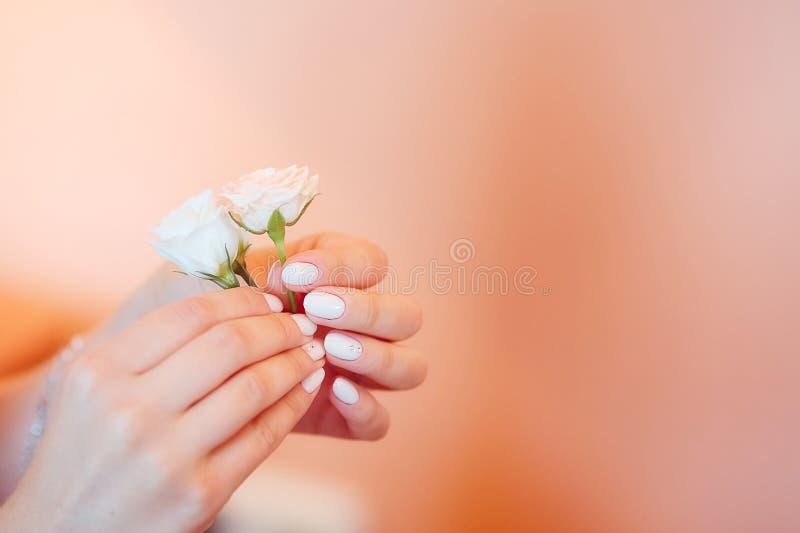 Piccole rose delicate in mani con un bello manicure su un fondo rosa Fuoco molle, immagine di sfondo fotografia stock