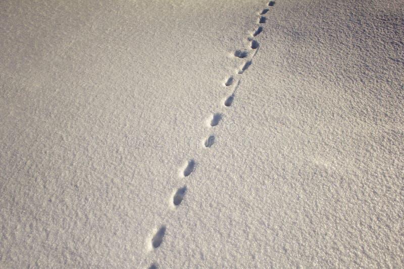 Piccole stampe delle piste dell'animale selvatico su neve bianca nell'inverno fotografie stock