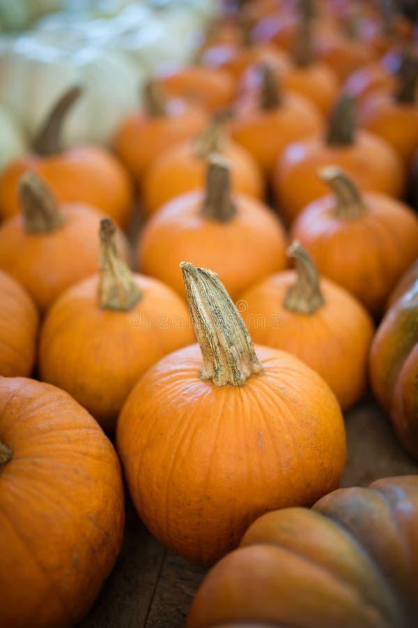 Piccole zucche arancioni fotografie stock libere da diritti