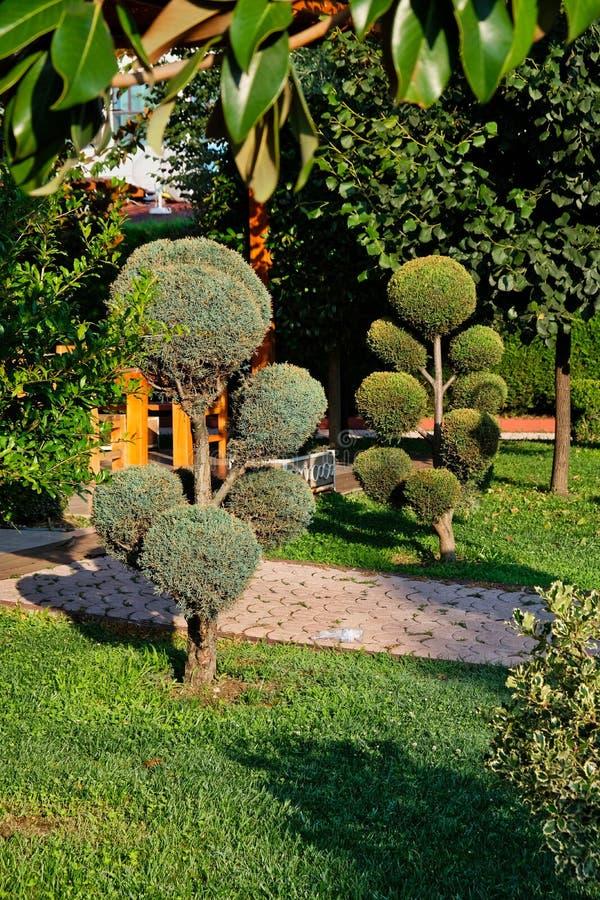 Piccoli alberi Manicured in giardino immagini stock libere da diritti