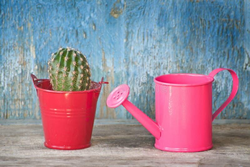 Piccoli annaffiatoio e cactus rosa Priorità bassa blu dell'annata fotografie stock