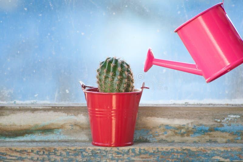 Piccoli annaffiatoio e cactus rosa sulla vecchia finestra immagini stock libere da diritti