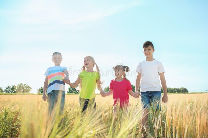 Piccoli bambini svegli che si tengono per mano nel giacimento di grano il giorno soleggiato fotografia stock