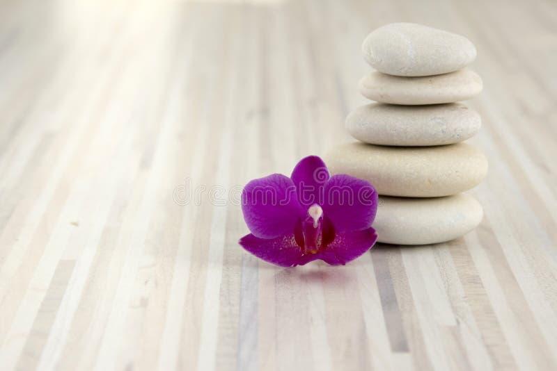 Piccoli ciottoli cairn, cinque pietre bianche, un fiore porpora dell'orchidea di phalaenopsis immagine stock libera da diritti
