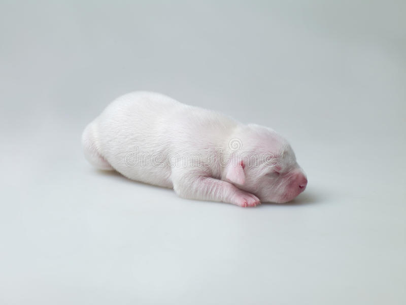 Piccoli Cuccioli Fotografia Stock Libera da Diritti