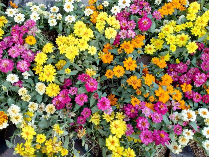 Piccoli fiori adorabili variopinti nel parco fotografia stock