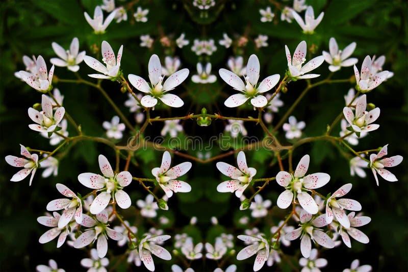 Piccoli fiori bianchi - fondo fotografie stock