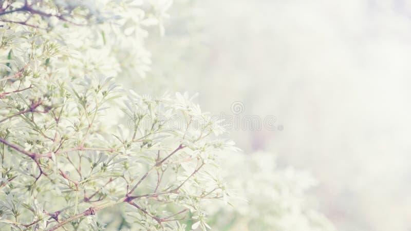 Piccoli fiori con fondo floreale d'annata soleggiato fotografia stock
