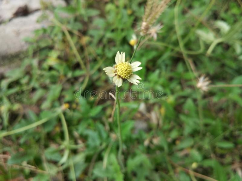 Piccoli fiori dell'erba fotografia stock