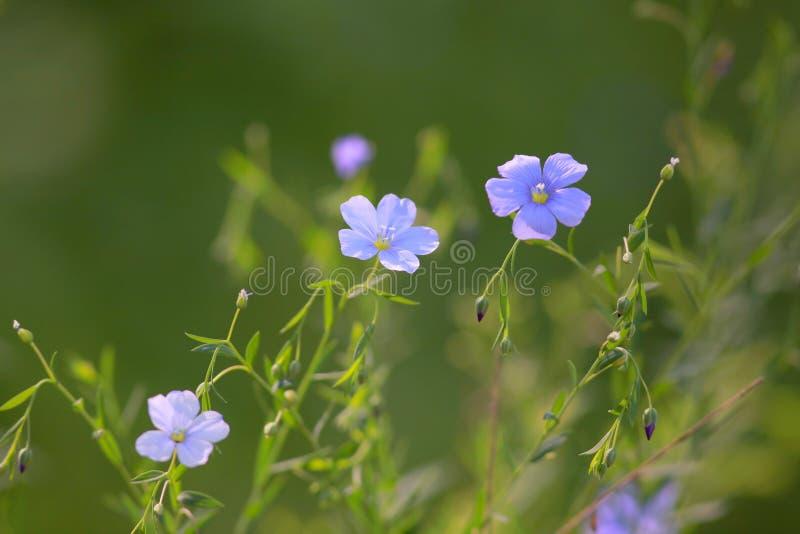 Piccoli fiori di estate fotografia stock