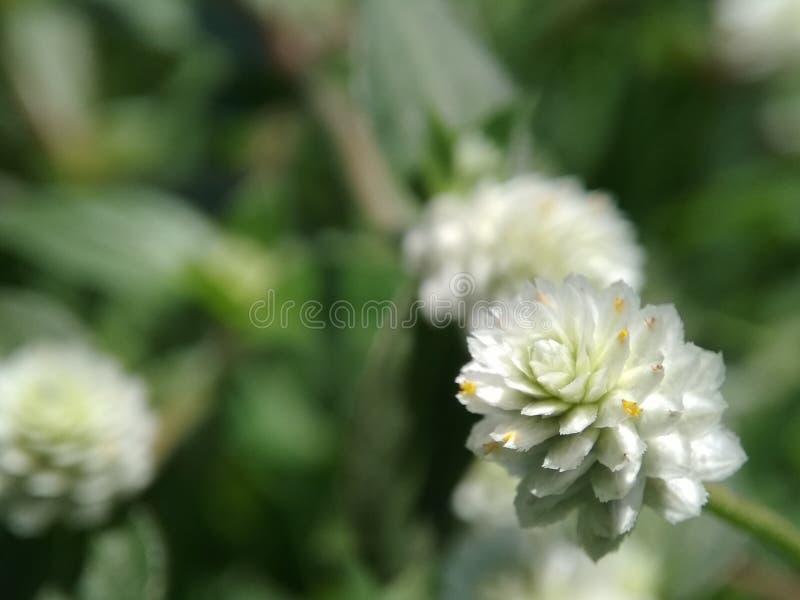 Piccoli fiori e graas in giardino immagini stock