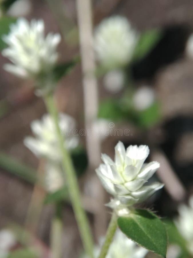 Piccoli fiori e graas in giardino fotografia stock