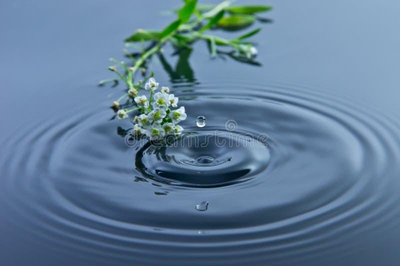 Piccoli fiori - gocciolina di acqua fotografia stock