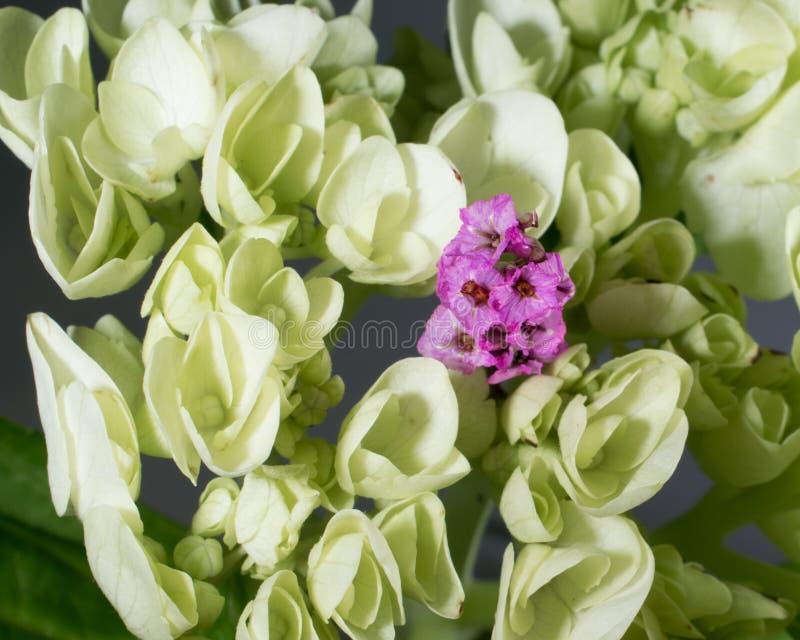 Piccoli fiori rosa dentro un gruppo di verde chiaro immagine stock