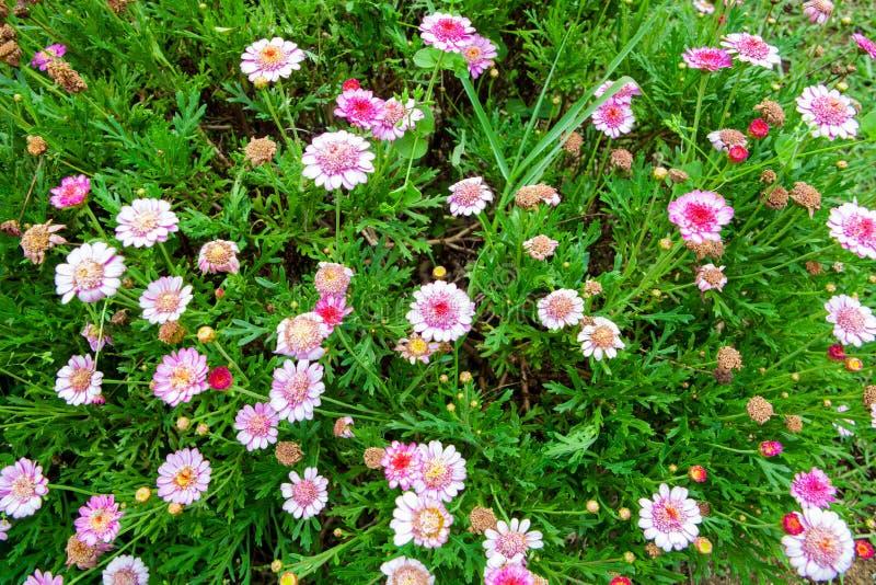 Piccoli fiori rossi della natura per fondo fotografia stock libera da diritti