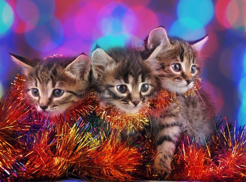 Piccoli gattini fra la roba di Natale immagine stock