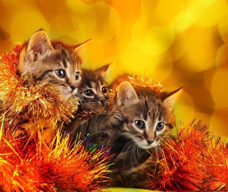 Piccoli gattini fra la roba di Natale fotografia stock libera da diritti