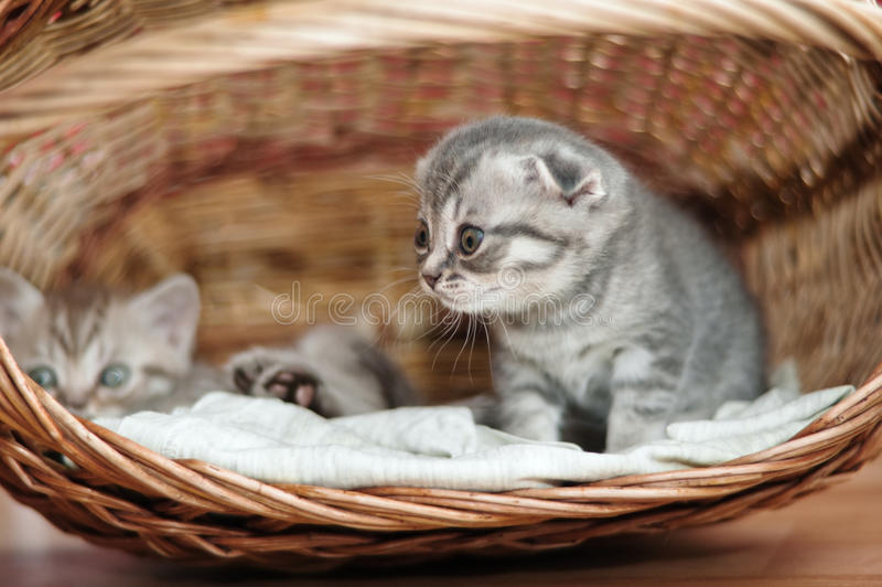 Piccoli gattini piacevoli fotografia stock