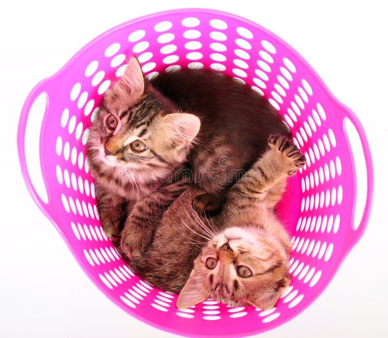 Piccoli gattini in un canestro fotografia stock