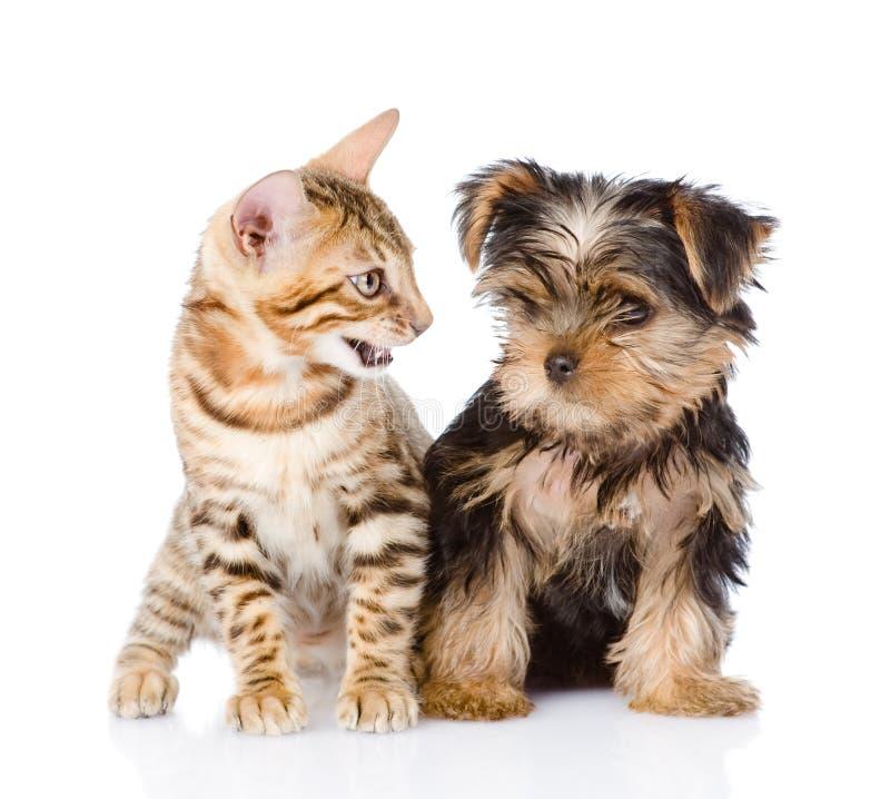 Piccoli gattino e cucciolo Su fondo bianco immagini stock