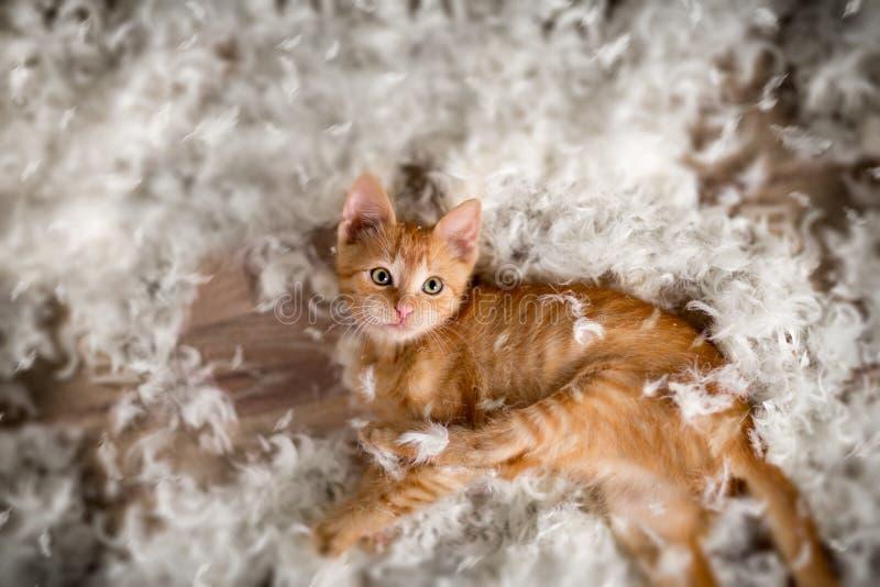 Piccoli gattino e piume fotografia stock libera da diritti