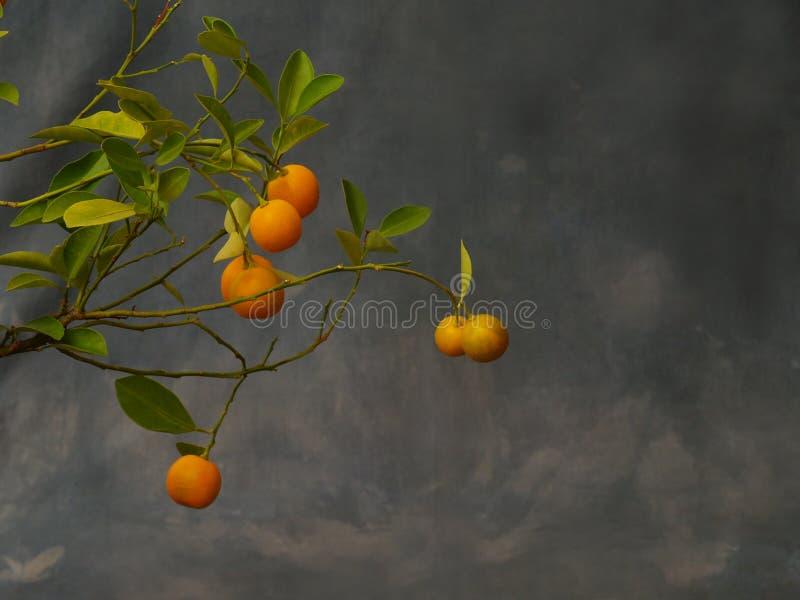 Piccoli mandarini immagine stock