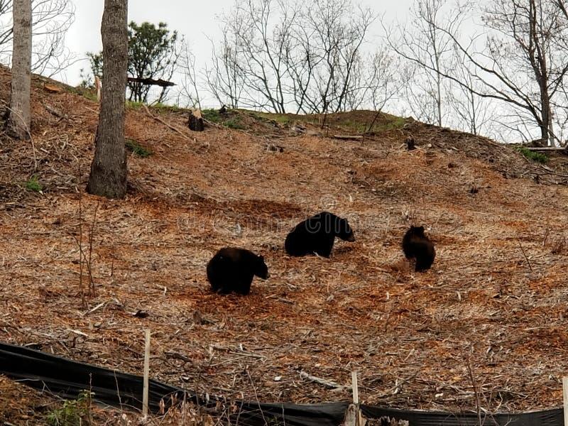 3 piccoli orsi immagine stock