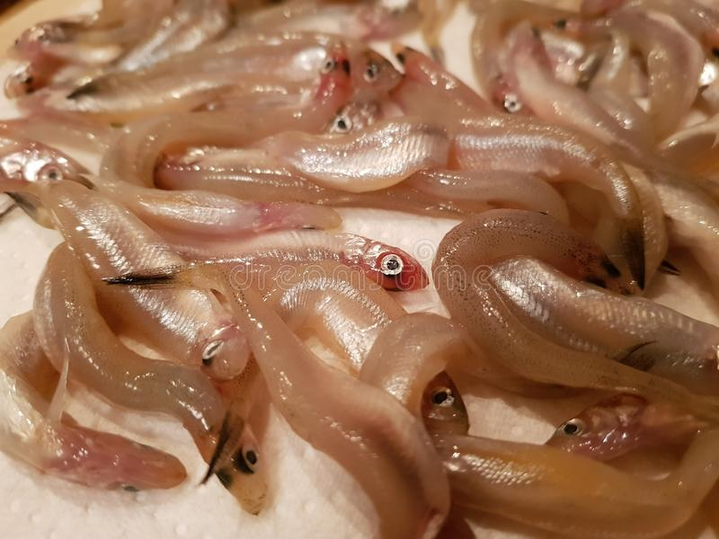 Piccoli pesci immagini stock