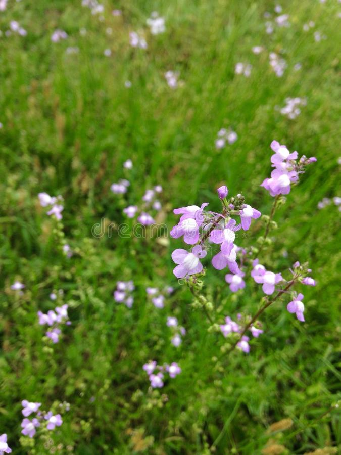 Piccoli petali fotografie stock libere da diritti