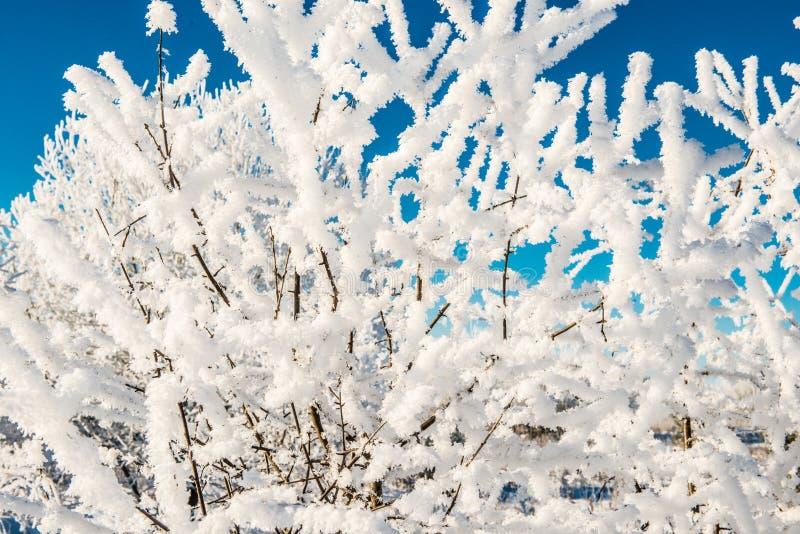 Piccoli ramoscelli con neve fotografie stock libere da diritti