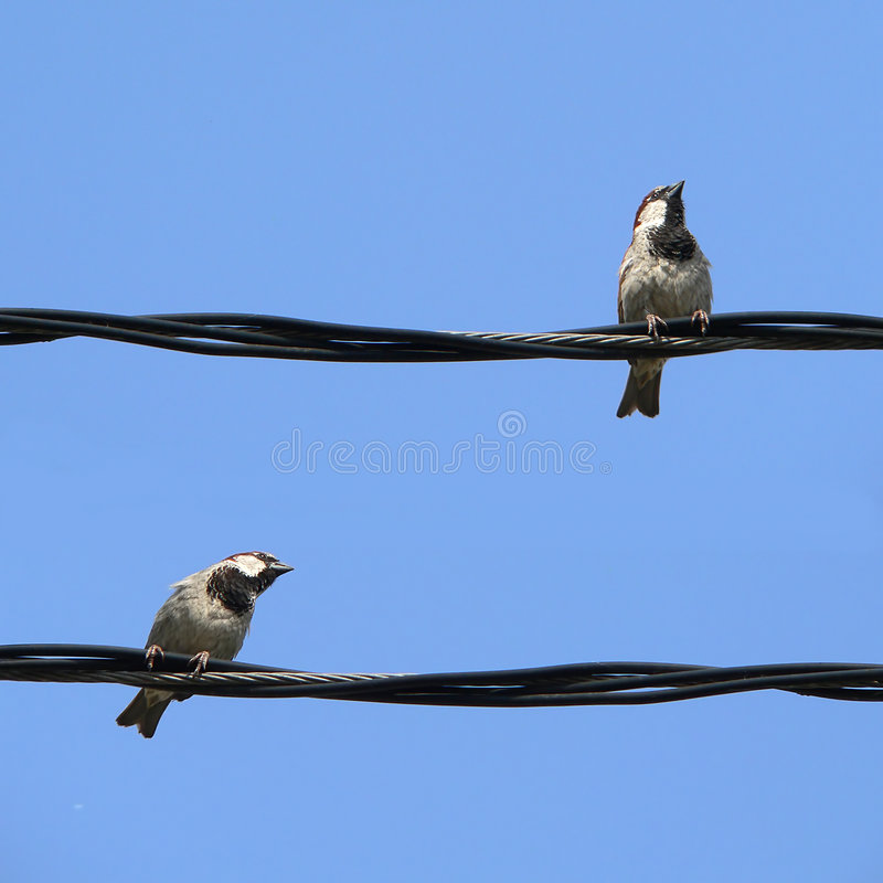 Piccoli uccelli immagine stock