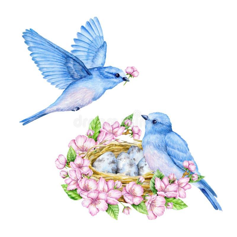 Piccoli uccelli blu svegli con il nido e le uova blu Illustrazione dell'acquerello illustrazione di stock