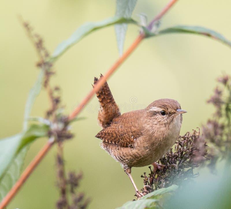 Piccoli uccelli, con i loro vari colori, forme, voli fotografia stock libera da diritti