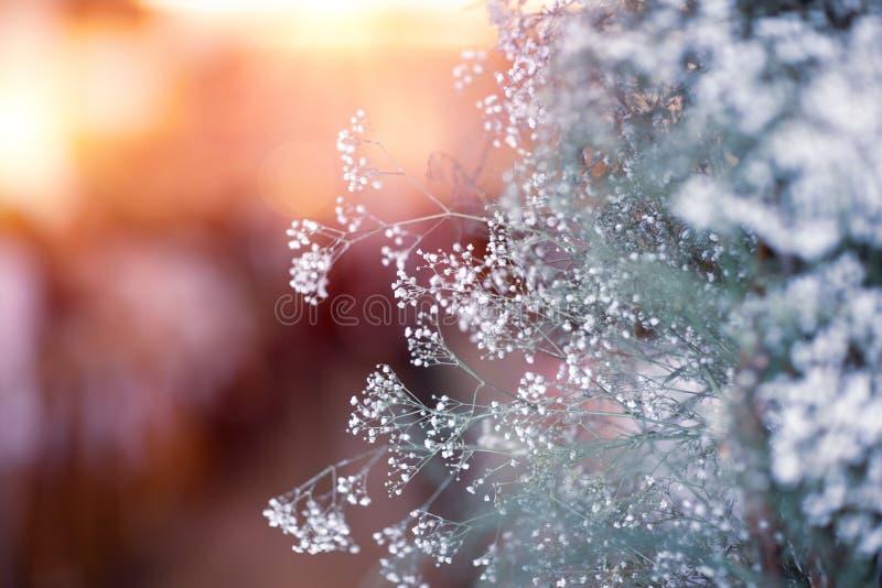 Piccoli wildflowers bianchi delicati immagine stock libera da diritti