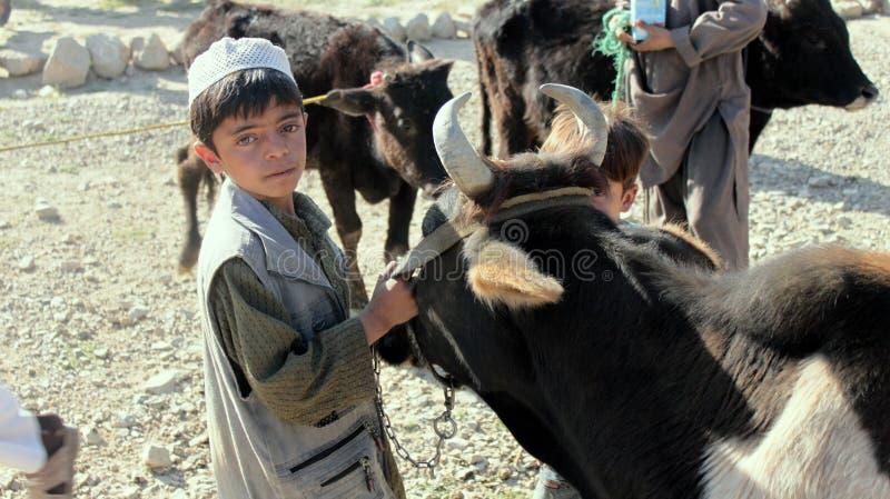 Piccolo afgano con la mucca fotografia stock libera da diritti