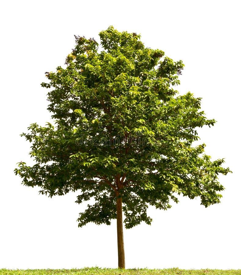 Piccolo albero