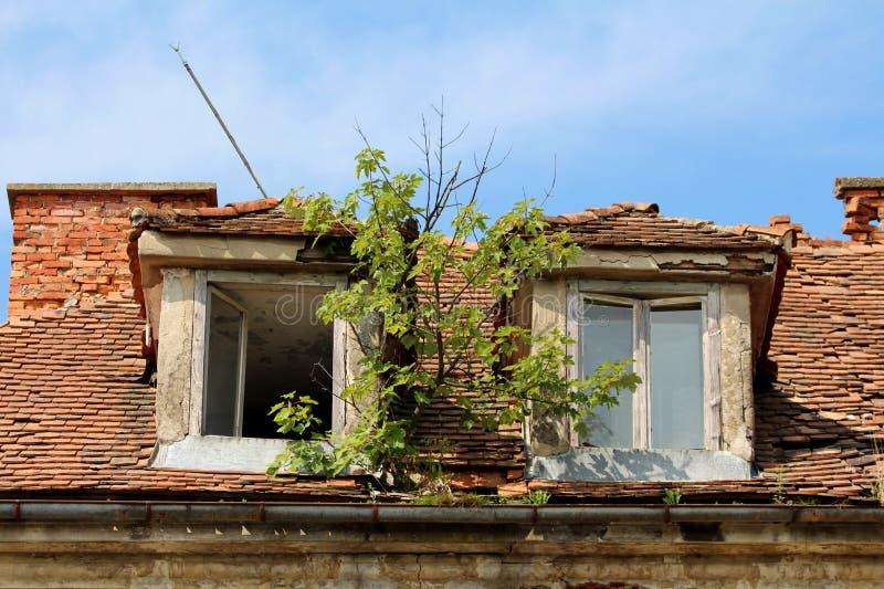 Piccolo albero che cresce dalla grondaia arrugginita del metallo fra due finestre rotte del tetto su vecchia costruzione abbandon immagini stock libere da diritti