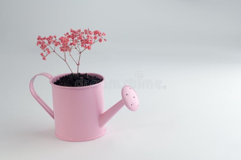 Piccolo albero che cresce in un annaffiatoio decorativo immagine stock