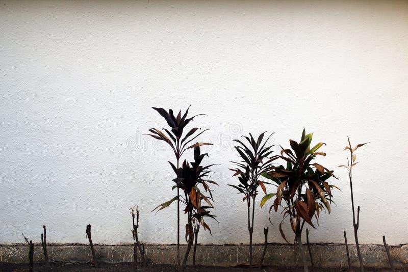 Piccolo albero con fondo ed i rami bianchi fotografia stock libera da diritti