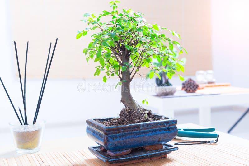 Piccolo albero dei bonsai fotografia stock immagine di for Bonsai prezzi