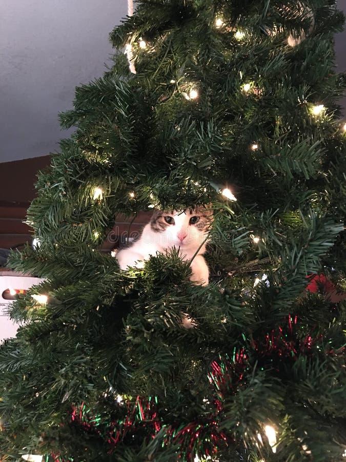 Piccolo albero di Natale del gatto fotografie stock