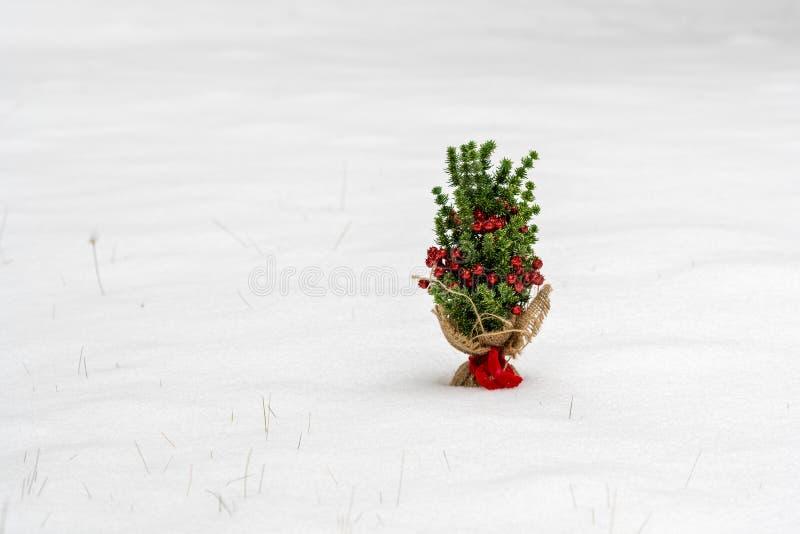 Piccolo albero di Natale nella neve immagini stock libere da diritti