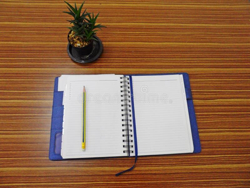 Piccolo albero in un vaso sulla tavola di legno immagini stock libere da diritti