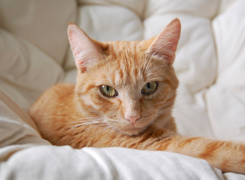 Piccolo amico arancione fotografie stock