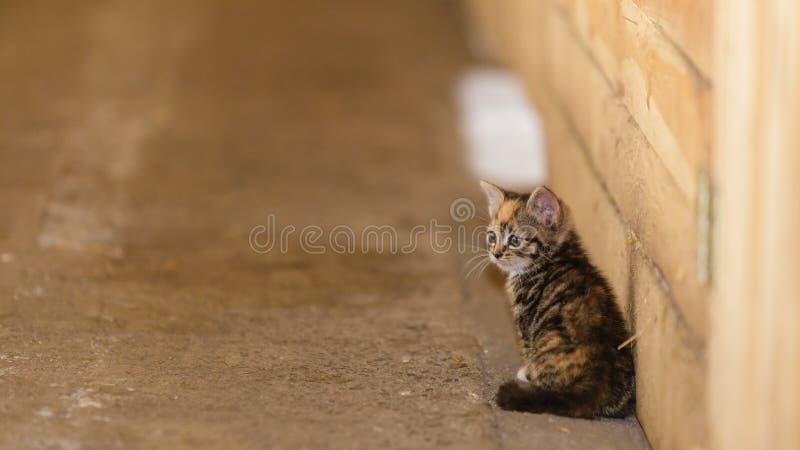Piccolo animale domestico sveglio del gatto del gattino del gattino fotografia stock libera da diritti