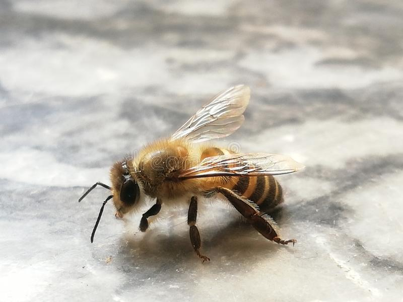 Piccolo ape fotografie stock