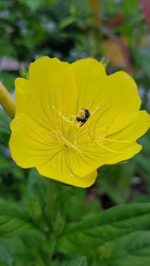Piccolo ape fotografia stock libera da diritti