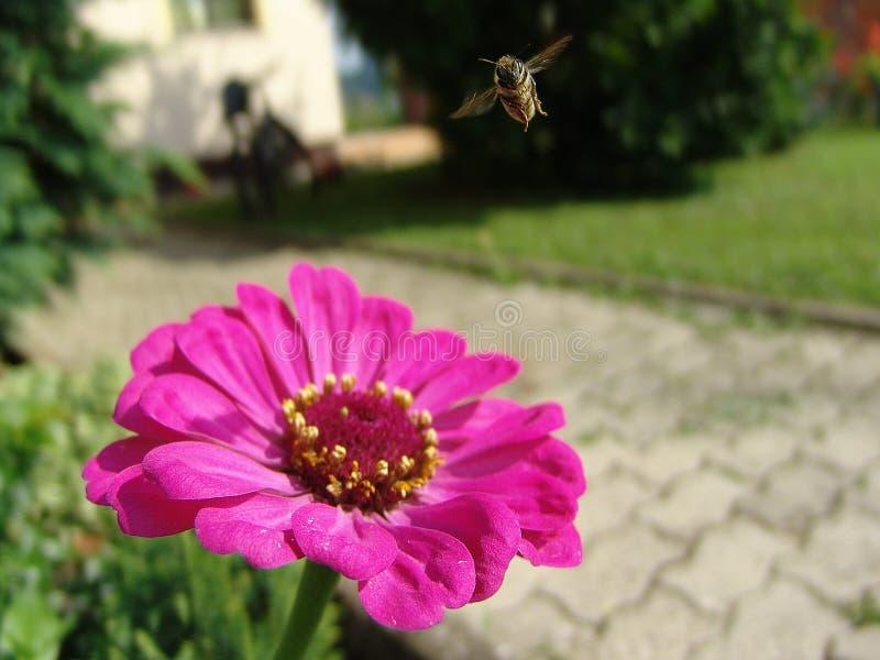 Piccolo ape occupato fotografia stock