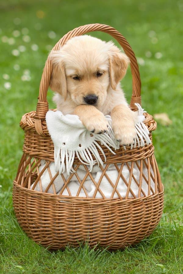 Piccolo bello cucciolo fotografia stock libera da diritti